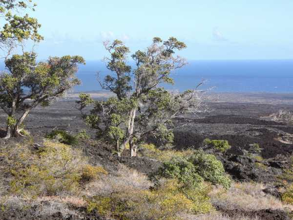Lava field - Hawaii Volcanoes National Park