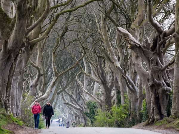 The dark hedges - Ballymoney
